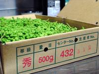 青山椒の佃煮05.jpg