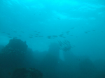 19テトラの海.jpg