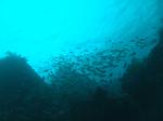 20テトラの海2.jpg