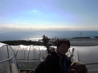 07苺ハウスから臨む駿河湾.jpg