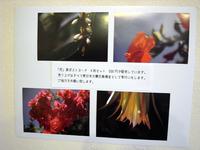 花松本尚子展09.jpg