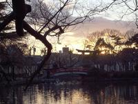 初詣201109大鳥居に沈む夕日.jpg